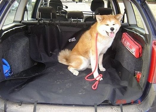 Compass Deka ochranná do kufru auta